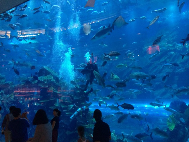 Scuba diver in The Dubai Mall Aquarium   ©Scott Edmunds / Flickr http://bit.ly/2kJAS3B