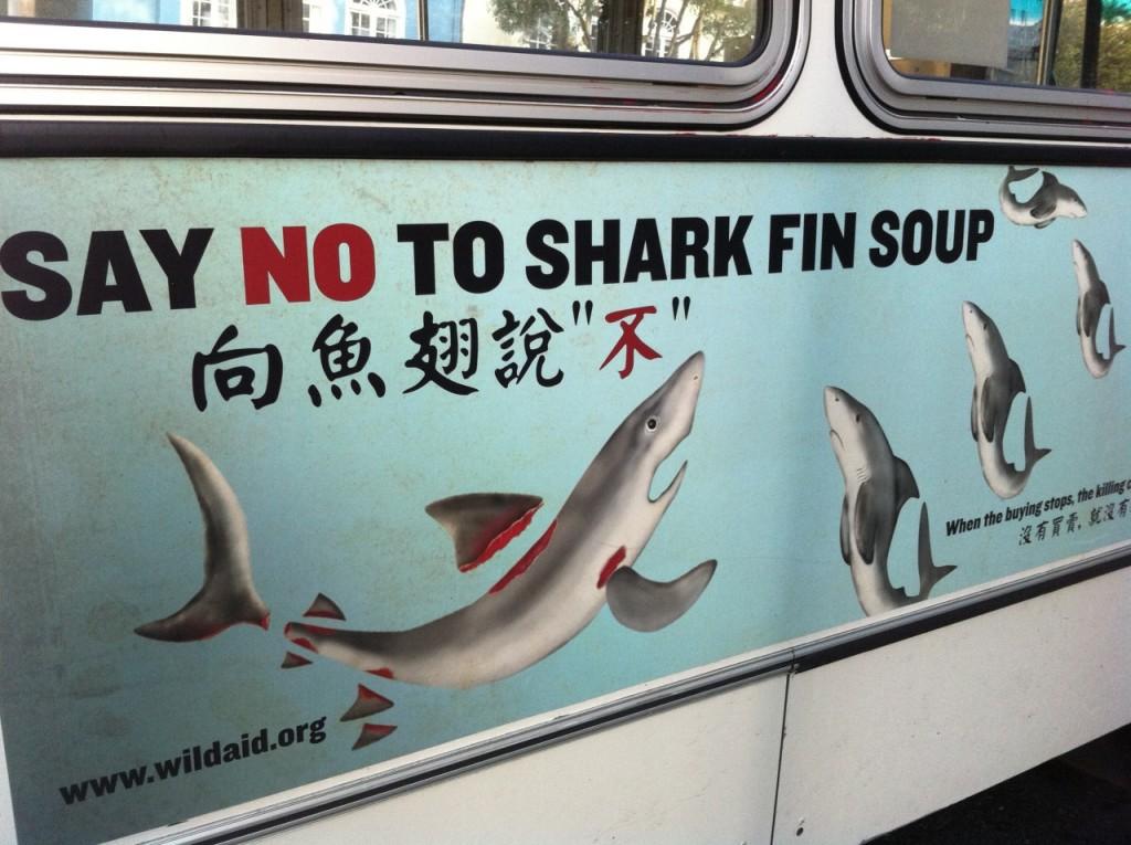say no to shark fin soup|© Frank Hebbert/Flickr