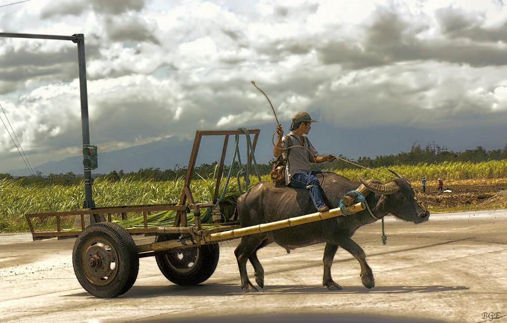 Carabao and cart | © Brian Evans / Flickr
