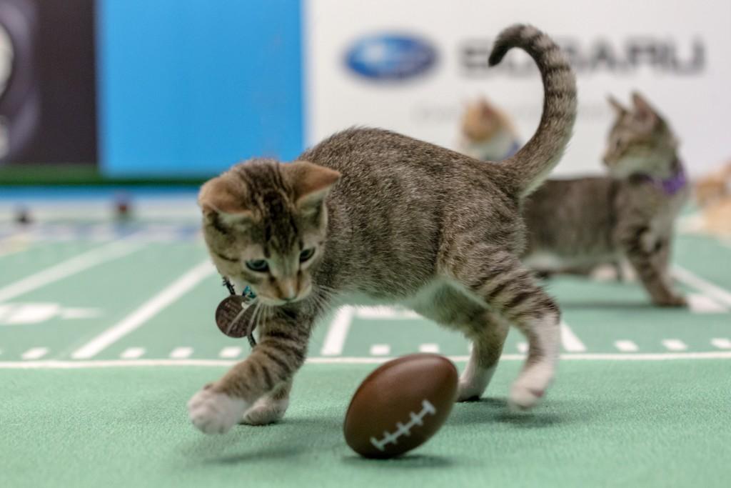 Kitten Bowl | © Crown Media/Marc Lemoine
