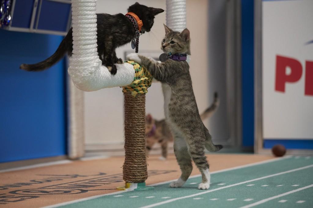 Kitten Bowl | © Crown Media United States LLC/Marc Lemoine