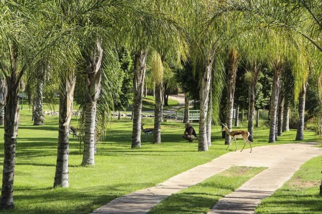 Forest Playground Children Play