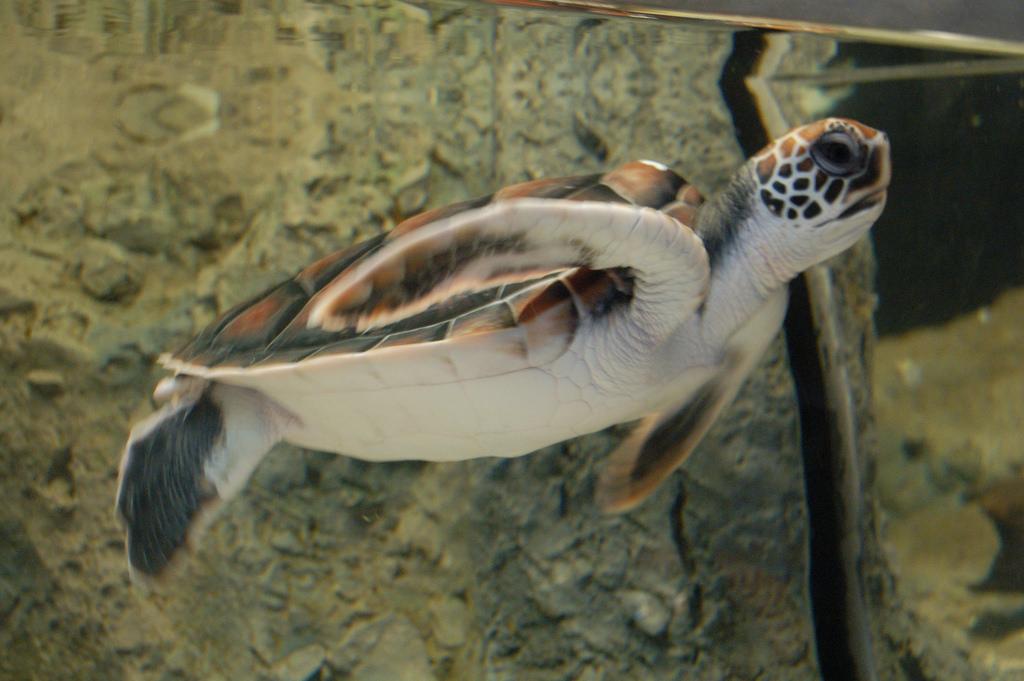 Green Turtle | © Thomas Au/Flickr