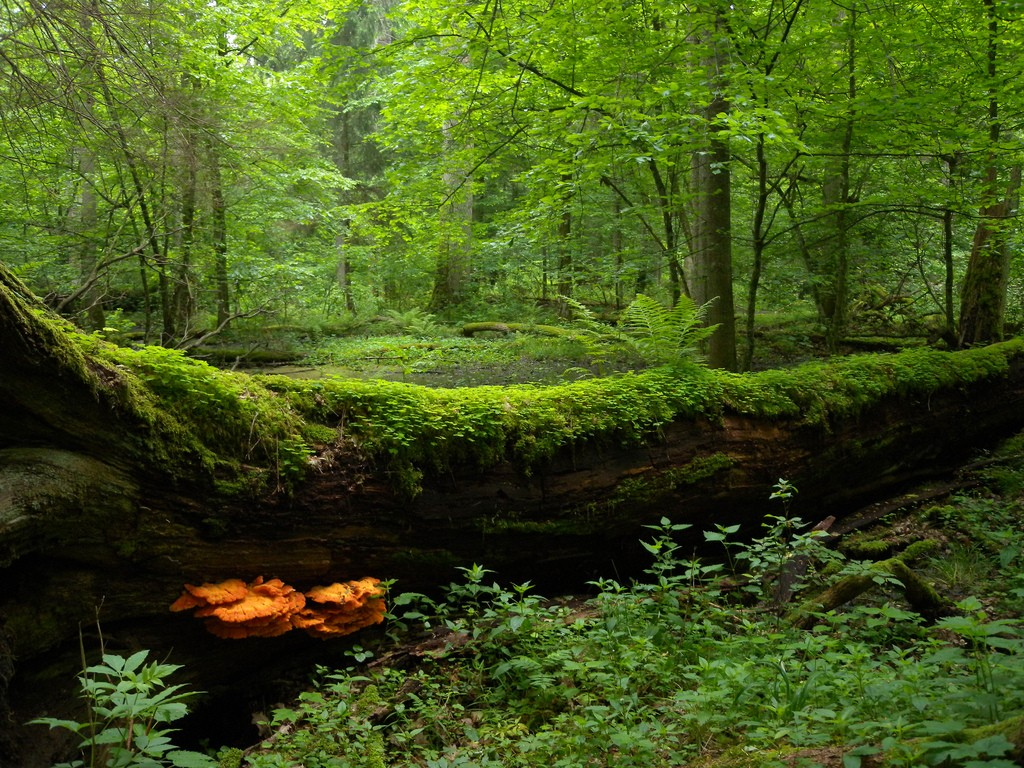 The 10 Most Beautiful National Parks In Poland
