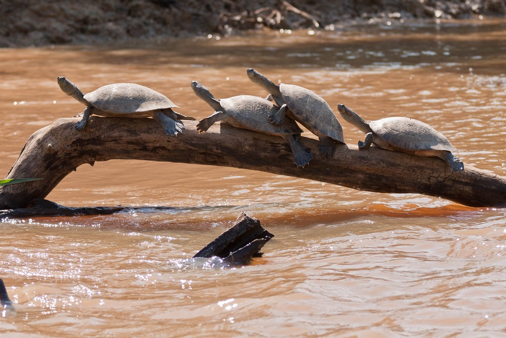 Turtles | © Maciej/Flickr
