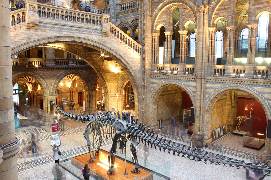 Dippy at the NHM's Central Hall | © Jon Gonzalo Torróntegui/Flickr