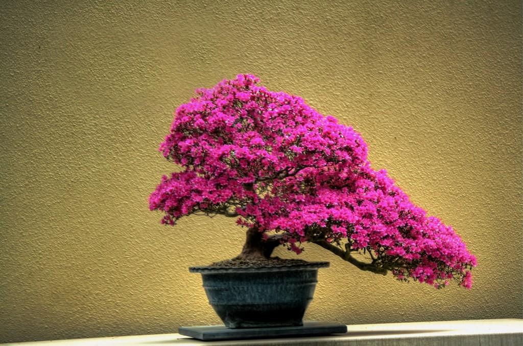 Bonsai tree | © Micah Sheldon/Flickr