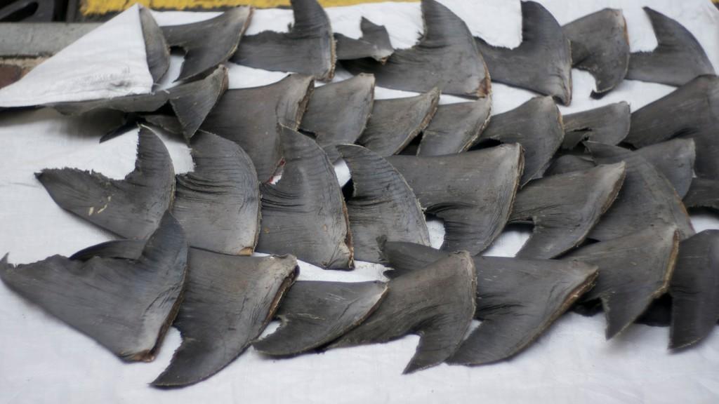 Fresh shark fins drying on sidewalk |© Nicholas Wang/Flickr