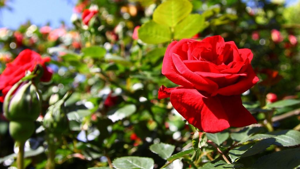 Beauty in bloom | © James Jardine / Flickr