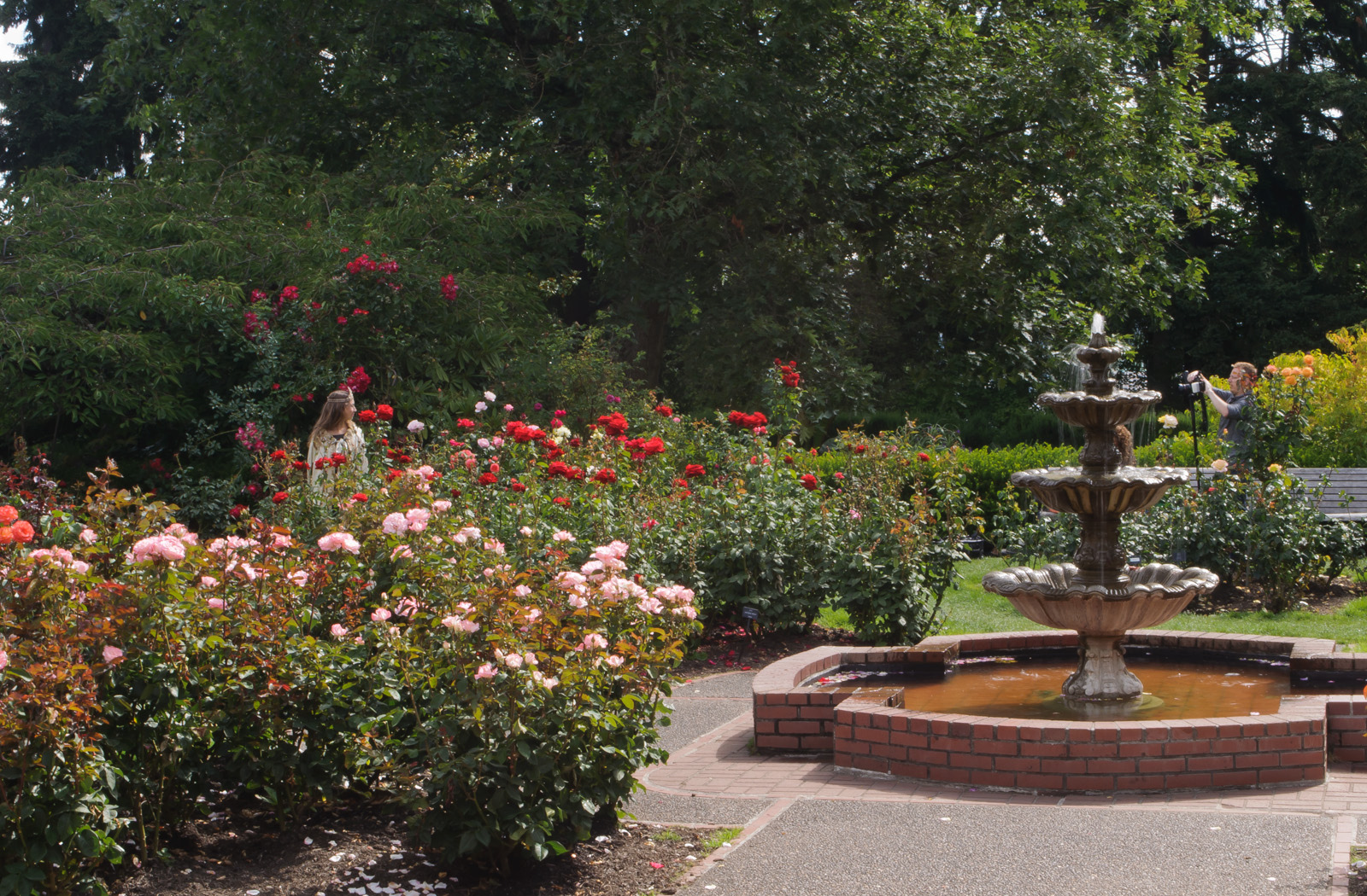 International Rose Test Garden, Portland | © InSapphoWeTrust/Flickr
