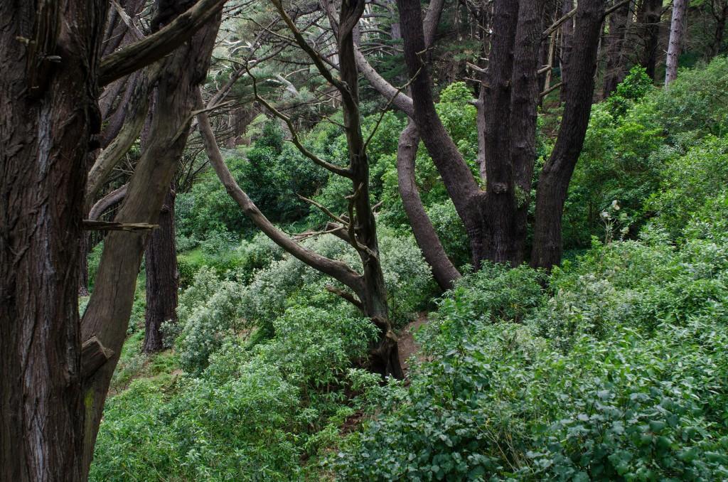 Mount Victoria Park   © Jeff Hitchcock/Flickr