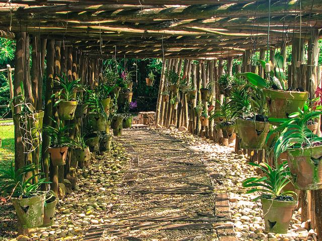 Botanical gardens © Remy Mboku