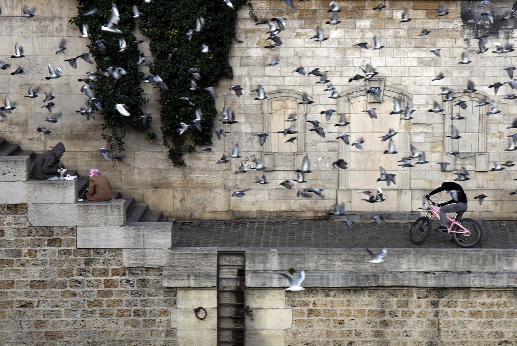 A cyclist ducking from a flock of seagulls and pigeons at the Seine │© _FXR / Flickr