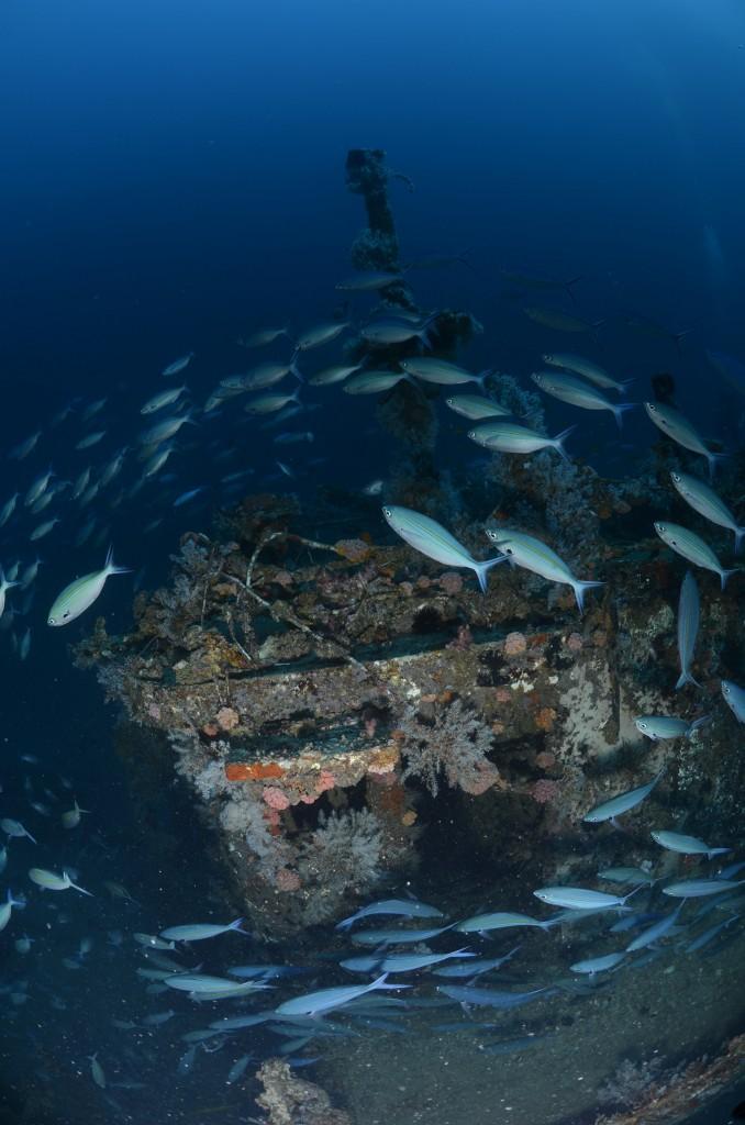 Wheelhouse of the Aldebaran shipwreck | Courtesy of Big Blue Divers