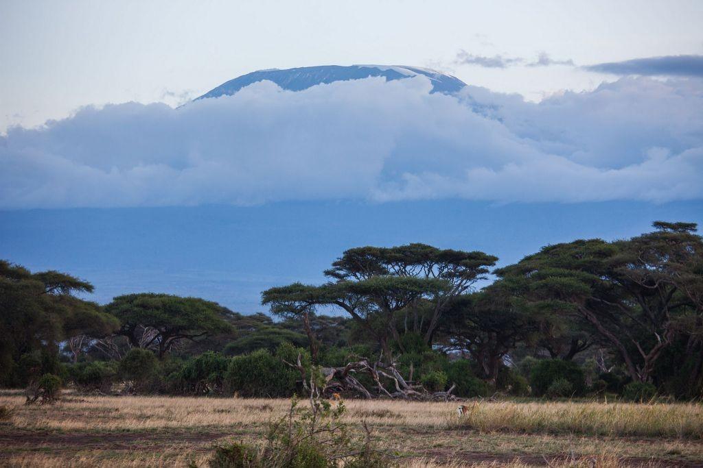 Amboseli National Park with a view of Mt. Kilimanjaro   © Ninara / Flickr