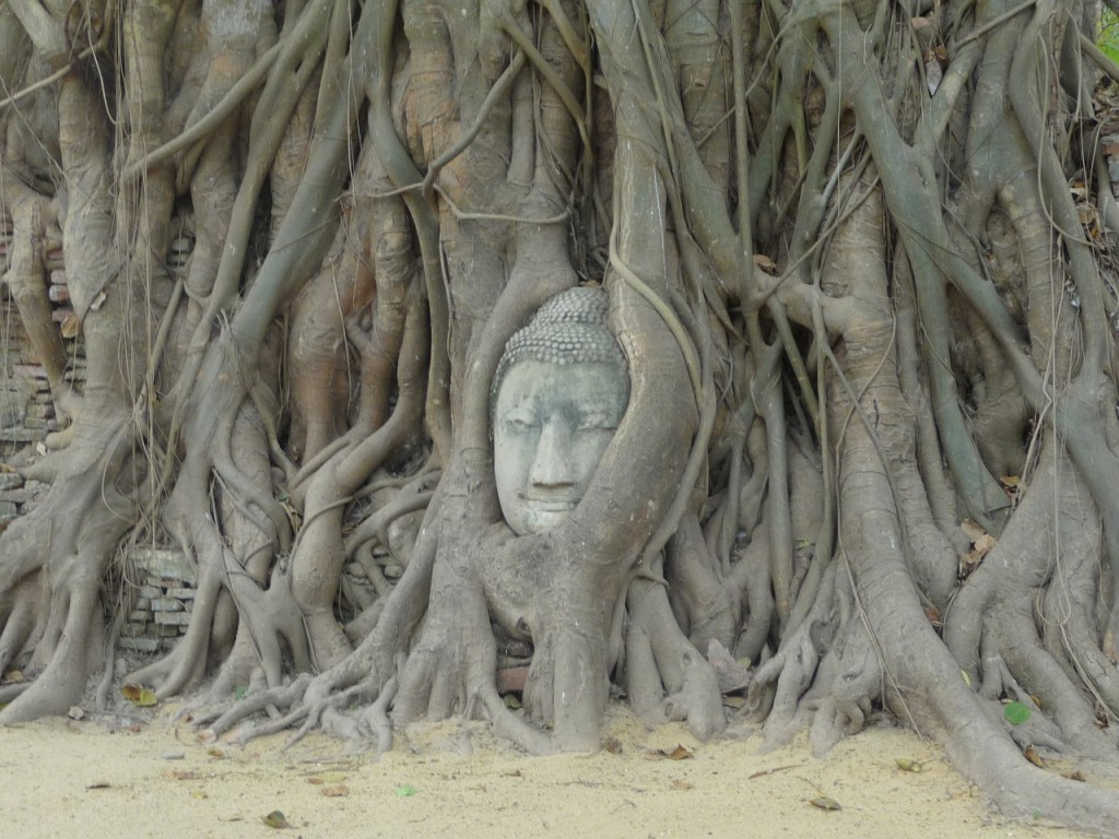 A sculpture of the Buddha entwined within the roots of a banyan tree, at the ruins of Ayutthaya, Thailand.   ©PaulMeek78/Pixabay