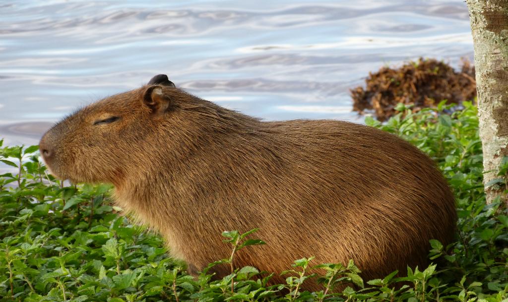 Pig In A Bathtub The Diy Guinea Pig Bath Crayons Amazon