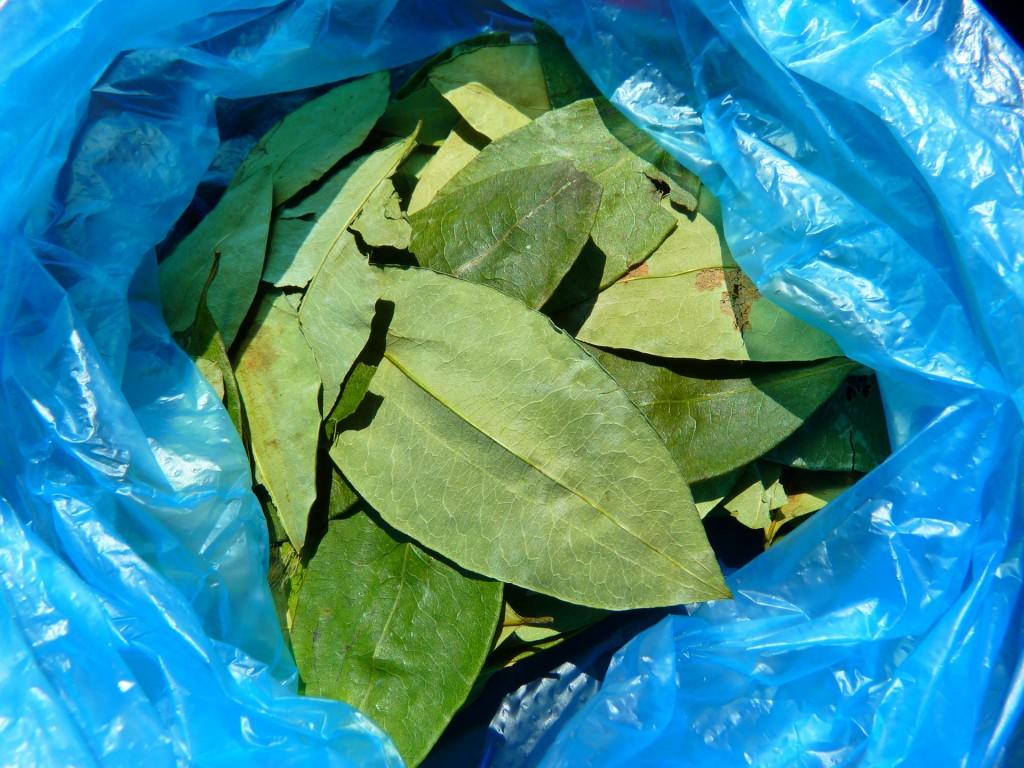 The raw leaf | © LoggaWiggler/pixabay
