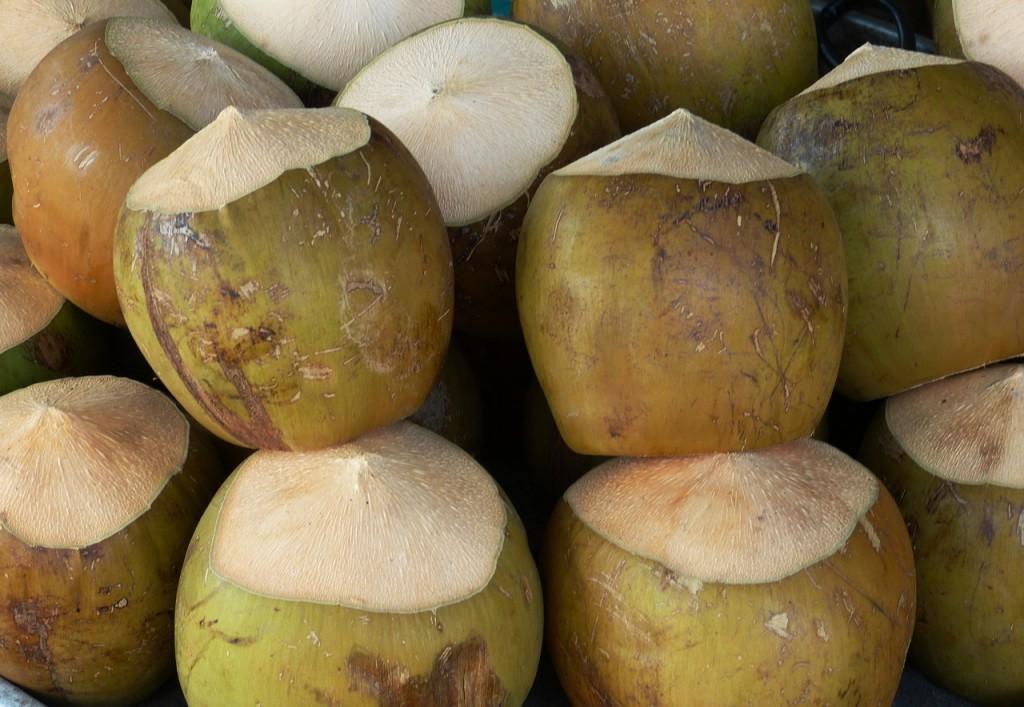 Coconuts © Falco / Pixabay