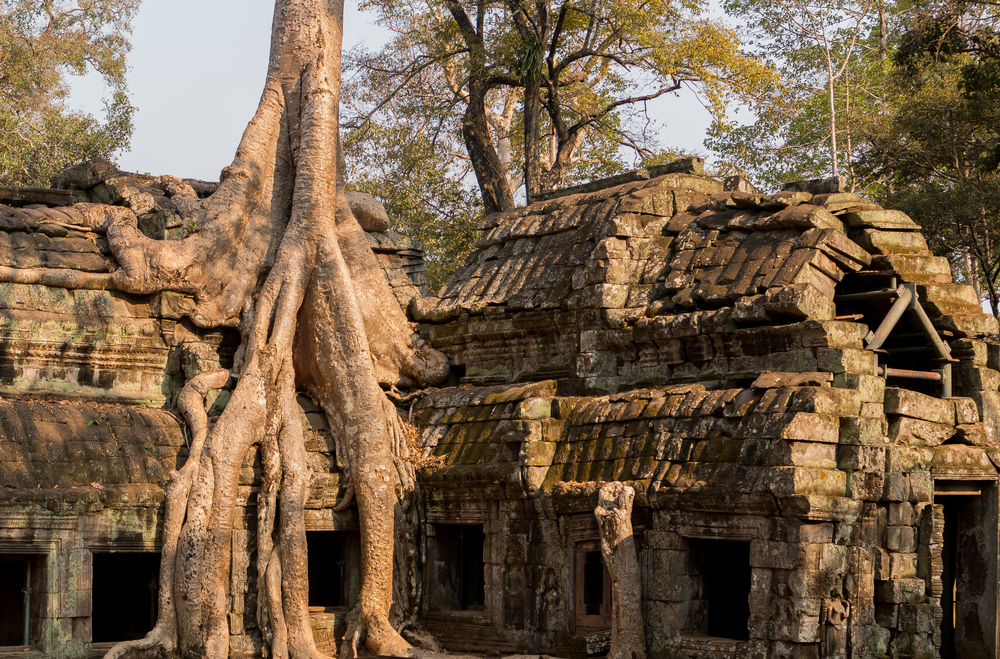 Ta Prohm provided the backdrop to Lara Croft: Tomb Raider starring Angelina Jolie. Copyright: trafi/ Shutterstock Inc