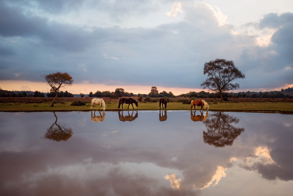 Daren Baker, ponies at a New Forest watering hole, England