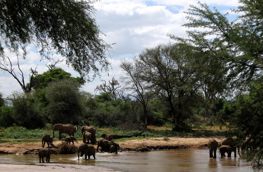 The Top Safaris In Kenya You Have To Go On