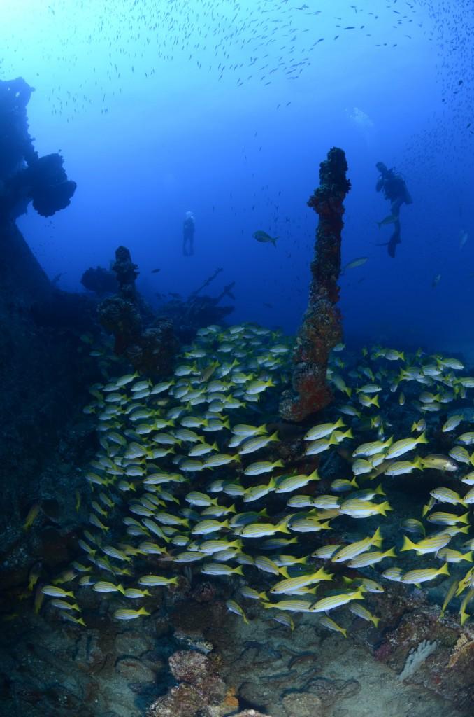 Ennerdale Shipwreck, Mahe Seychelles | Courtesy of Big Blue Divers