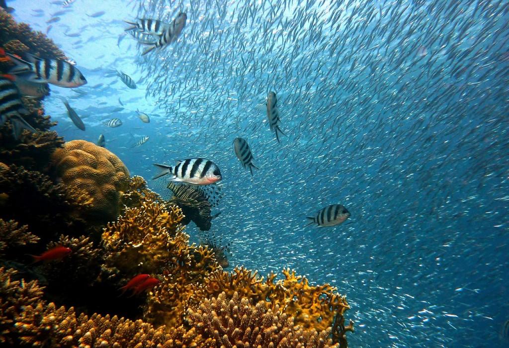 Exploring underwater | Pixabay