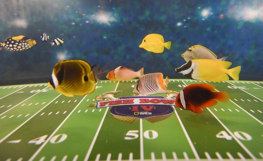 Fish Bowl IV | © National Geographic/Jason Arnold
