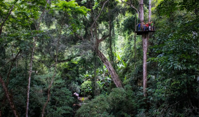 Spend some time hanging out in the treetops with gibbons © Flight of the Gibbons
