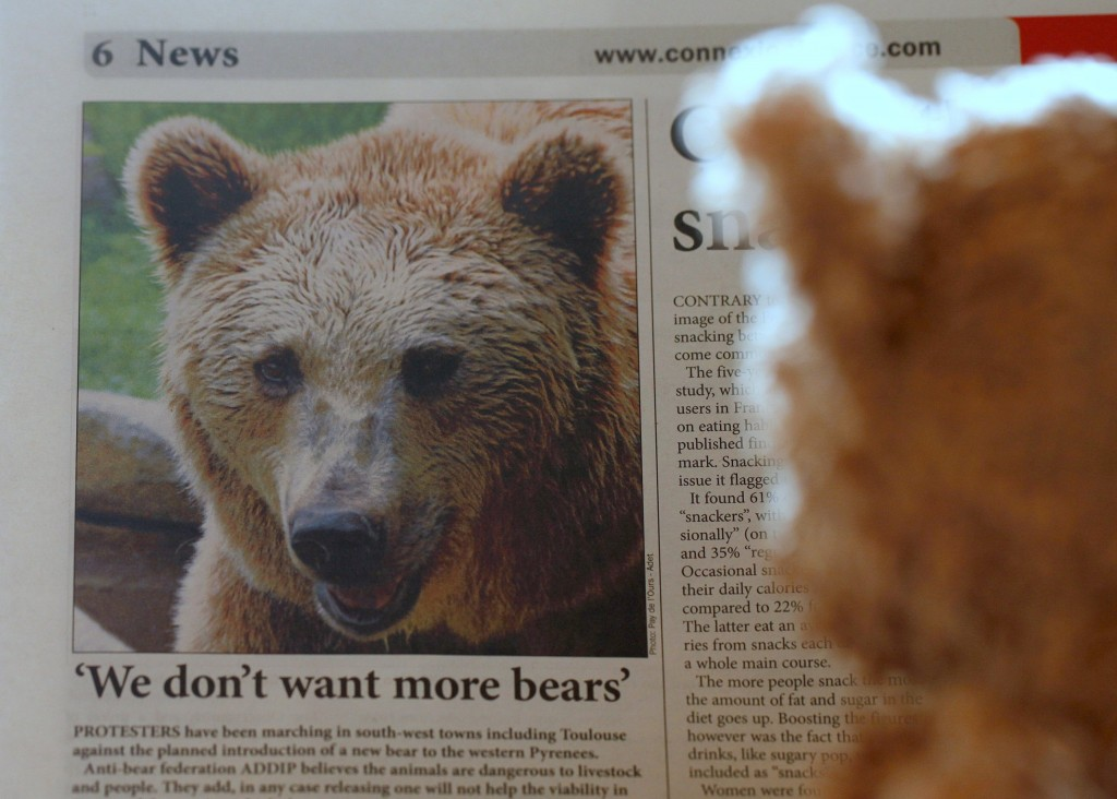 Headline in The Telegraph about bear protests in the Pyreness and an interested reader │© jenny downing
