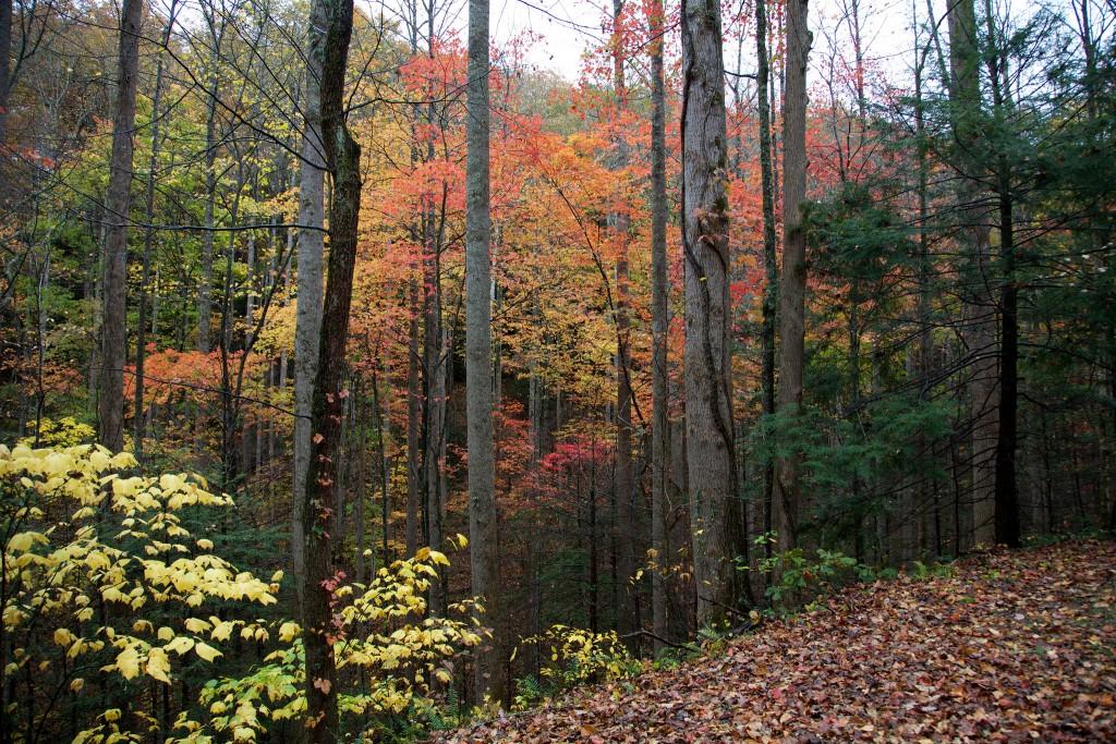 Great Smoky Mountains / (c) David Brossard / Flickr