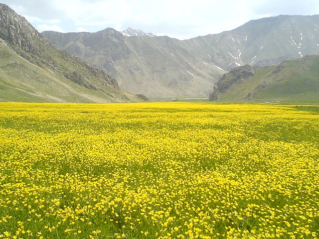 A bright yellow carpet of wild flowers at Lar National Park | © Mahdi Kalhor / Wikipedia