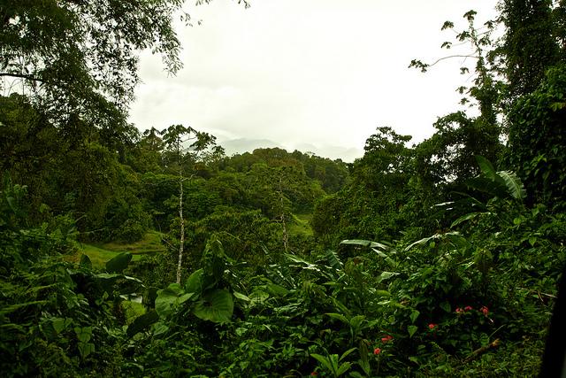 Rain Forest, Costa Rica   © Vytautas Šėrys/Flickr