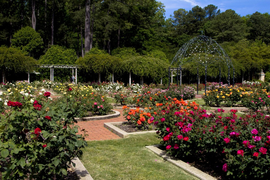Rose Garden at the Botanical Gardens