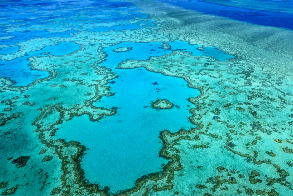 great barrier reef outline 2 physical characteristics grea Mutationism, known before 1900 as saltationism, is the set of views of evolution that emphasizes the role of large mutations capable of causing sudden jumps including immediate speciation.