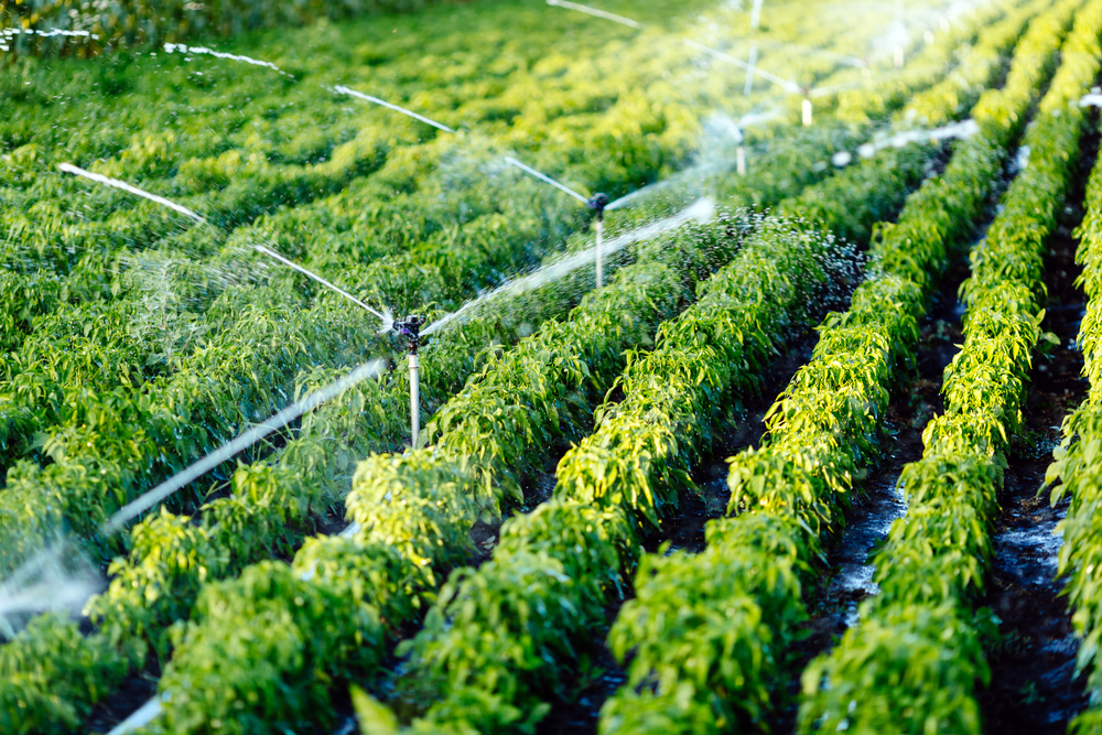 Irrigation system in function watering agricultural plants| © Shutterstock