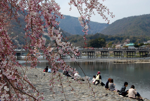 The Cherry Blosson in spring time at Togetsukyo Bridge|© jpellgen Flickr