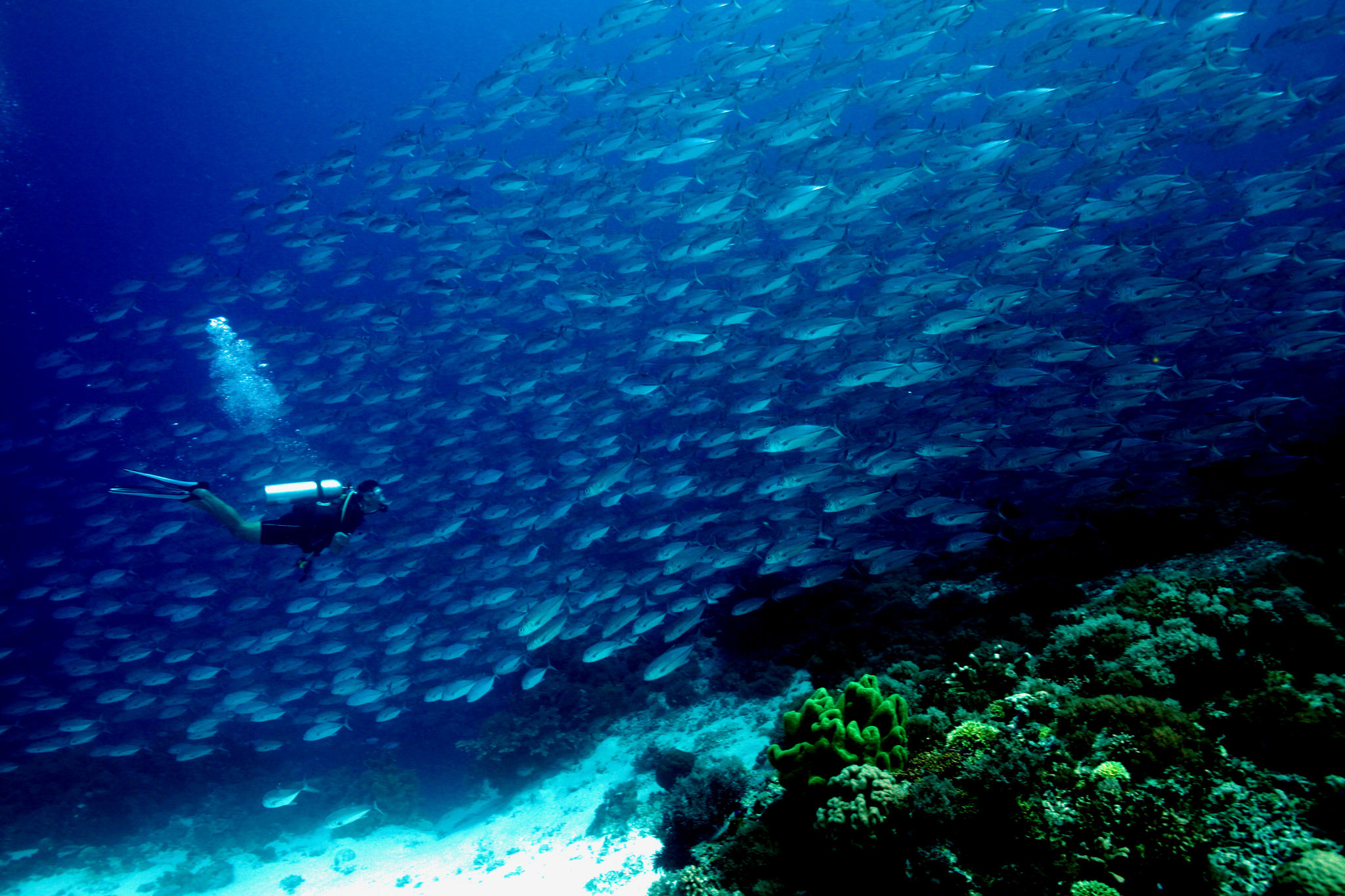The Most Beautiful Places To Go Scuba Diving In The
