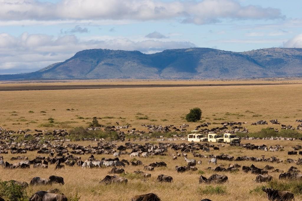 Wildebeest migration at Maasai Mara   © Wendy Lin / Flickr
