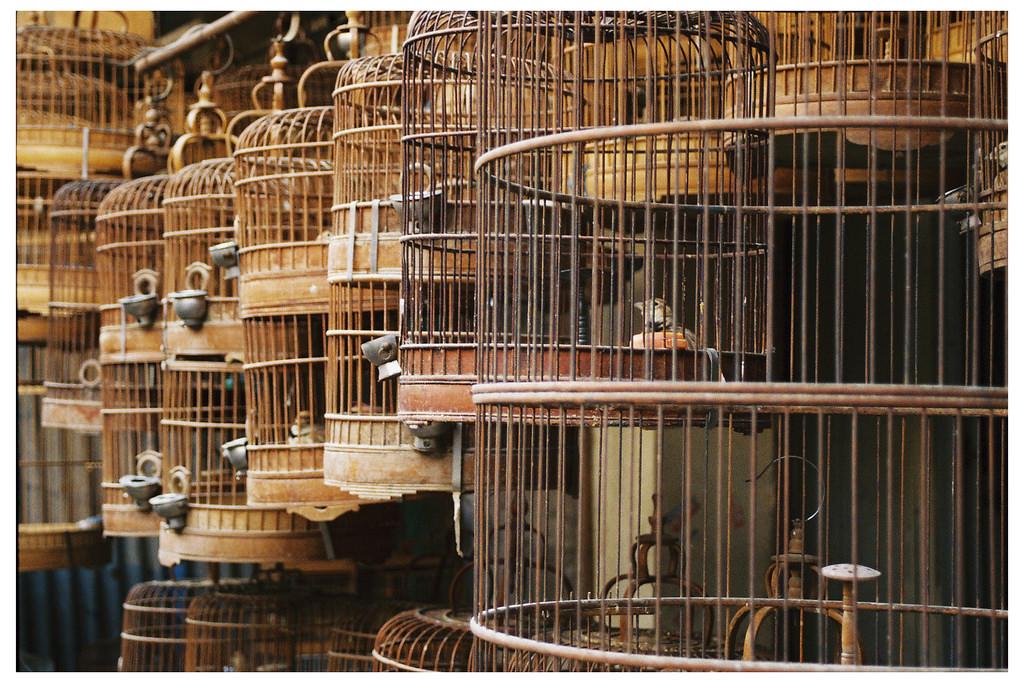 Bird Market | ©Cyril Massenet/Flickr
