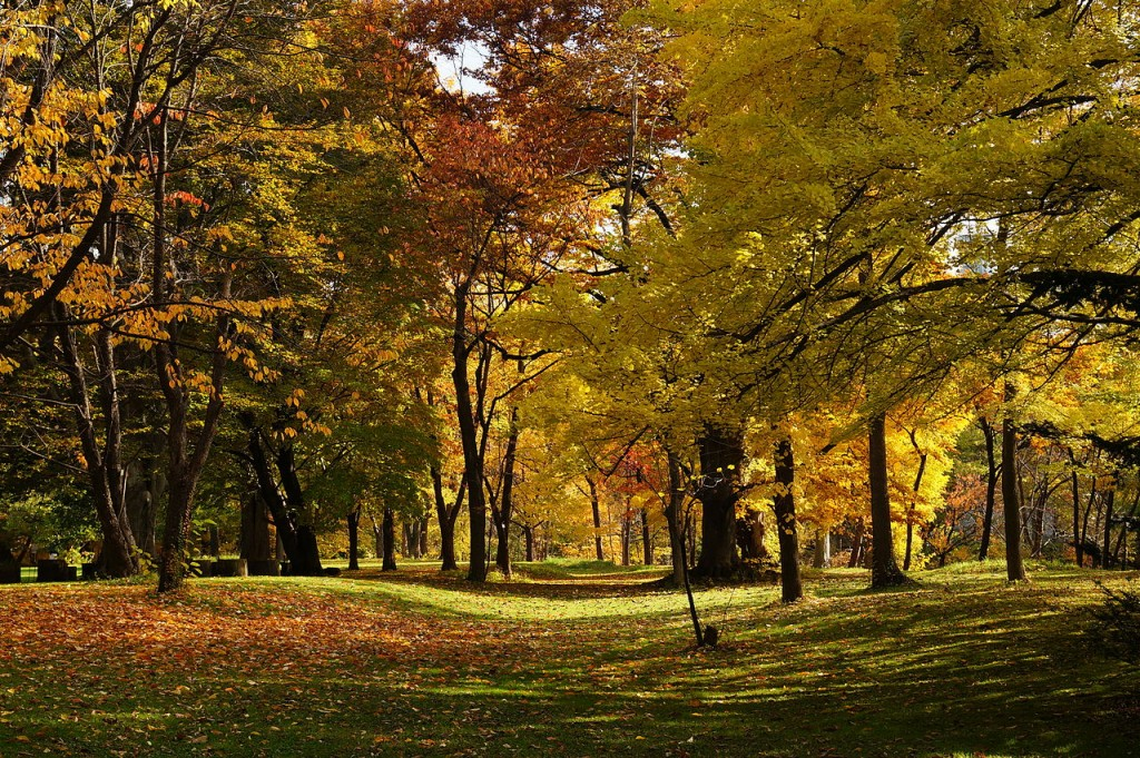 At Hokkaido University Botanical Gardens in Sapporo, Hokkaido prefecture, Japan. | ©663highland / Wikimedia Commons