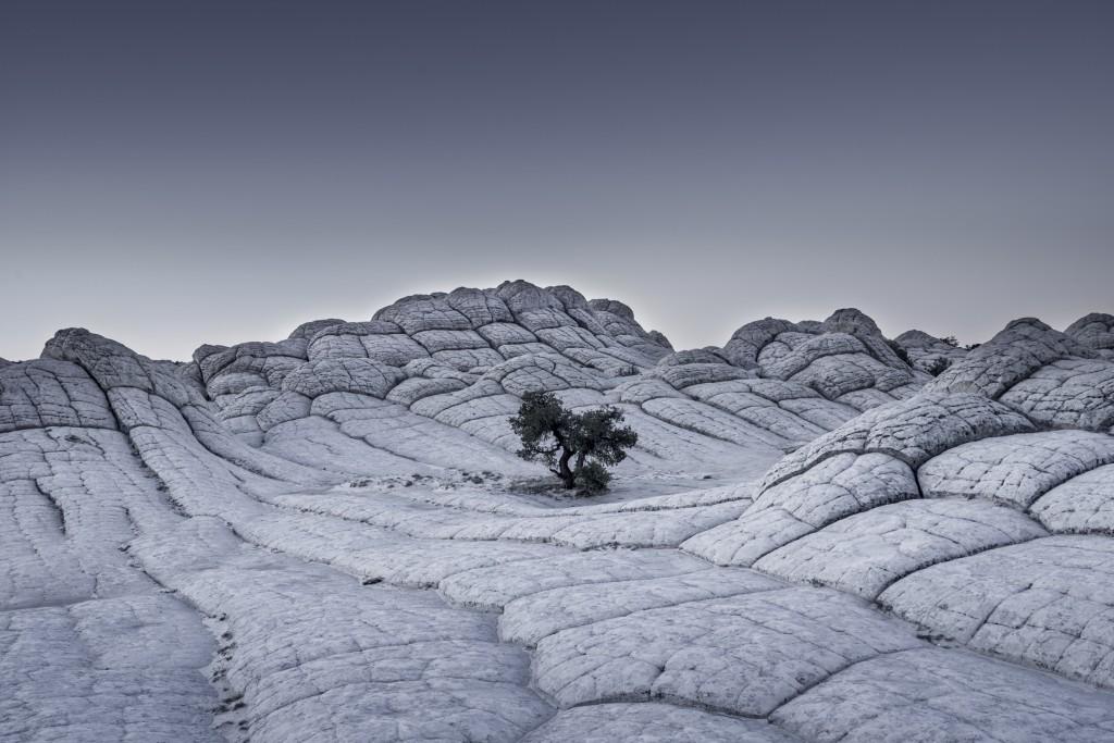 'Lonely Tree' | © Tom Jacobi, Germany / 2017 Sony World Photography Awards
