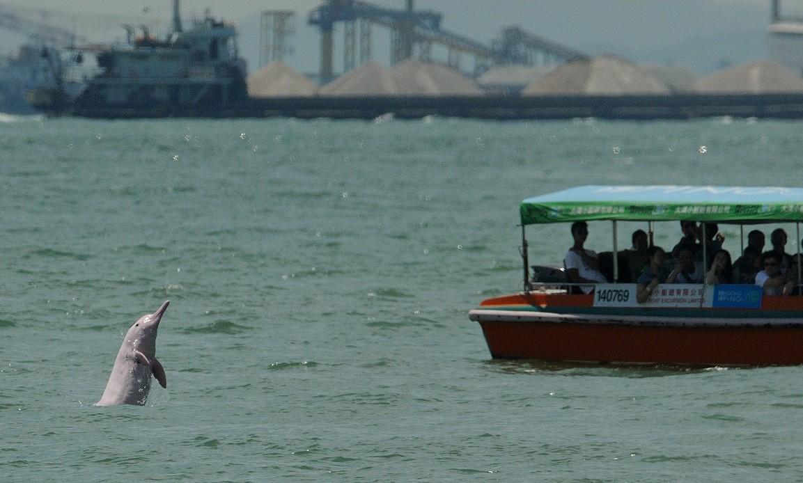 Pink dolphin spotting | © chingwa1/Flickr