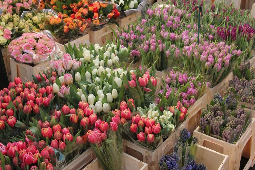 Flowers on display at Albert Cuypmarkt | © Franklin Heijnen / Flickr