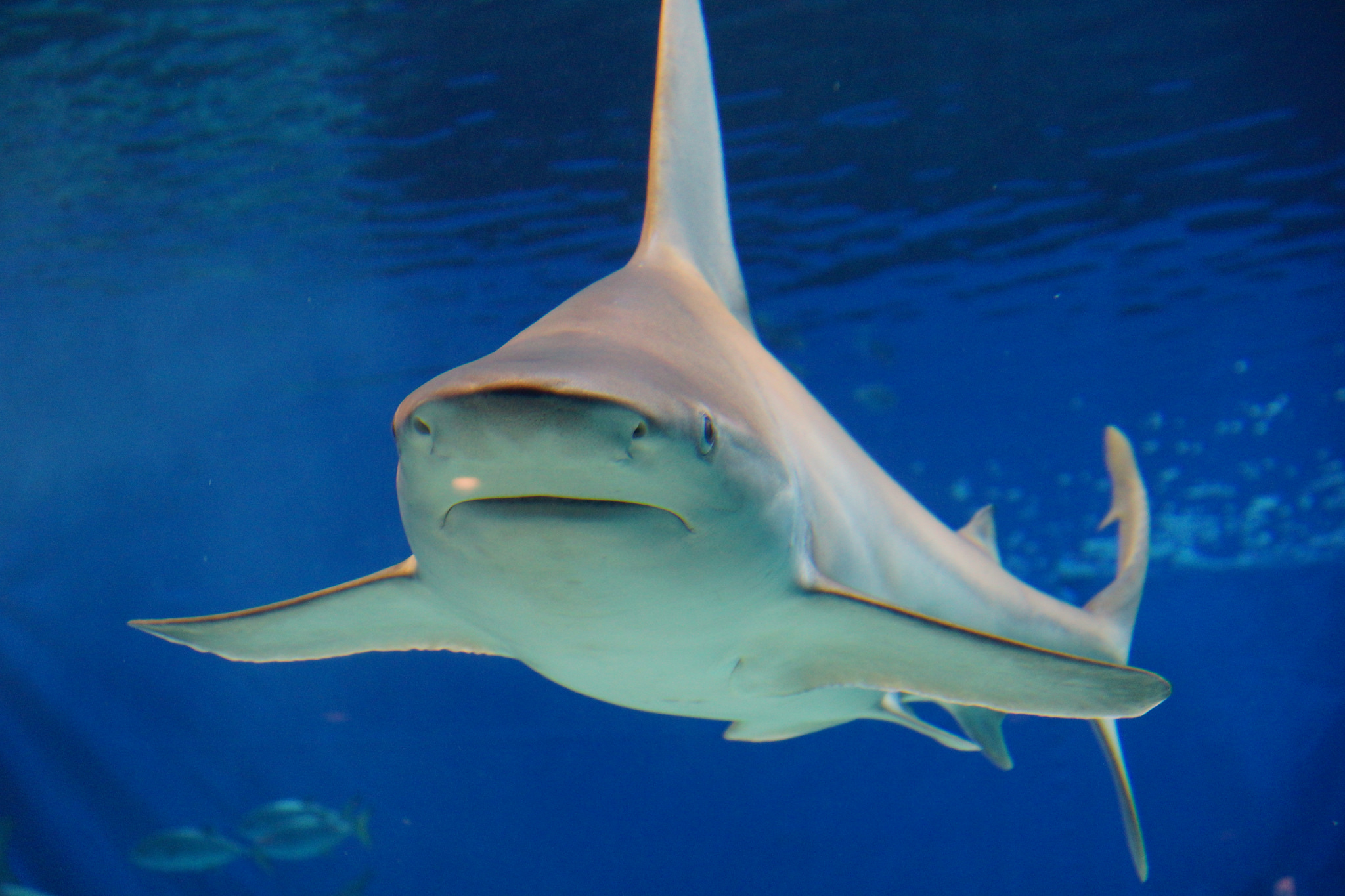 the best places to dive with sharks in fiji
