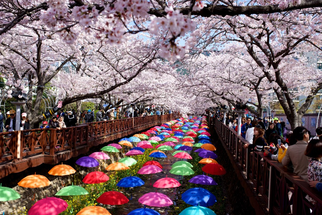 The Most Beautiful Places To See Cherry Blossoms In South Korea