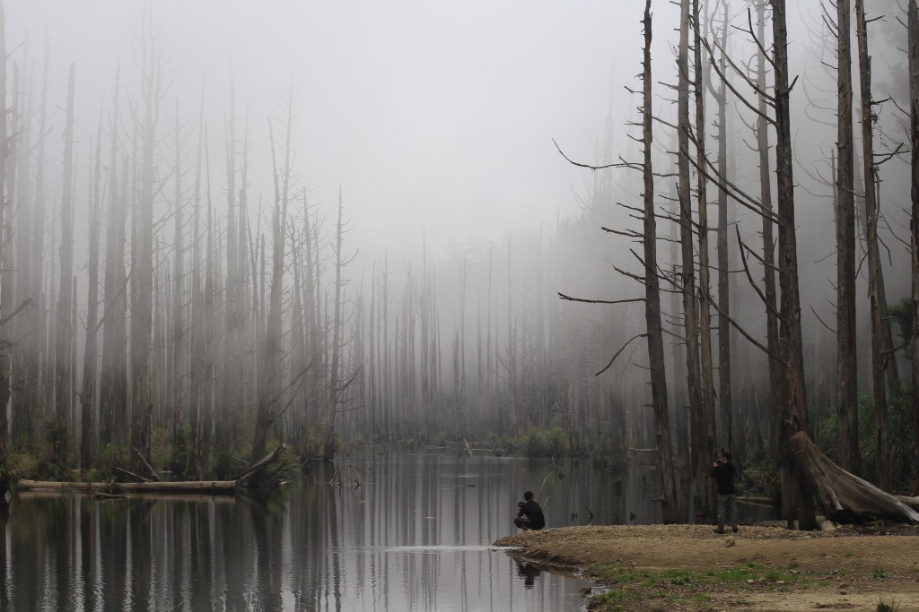 Shuiyang Forest | © Joe Lo / Flickr
