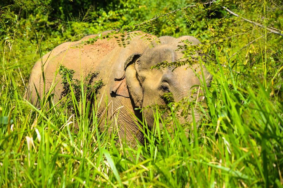 The Elephant Sanctuary at Hurulu Eco Park – Habarana | © Hashan Gunasekara