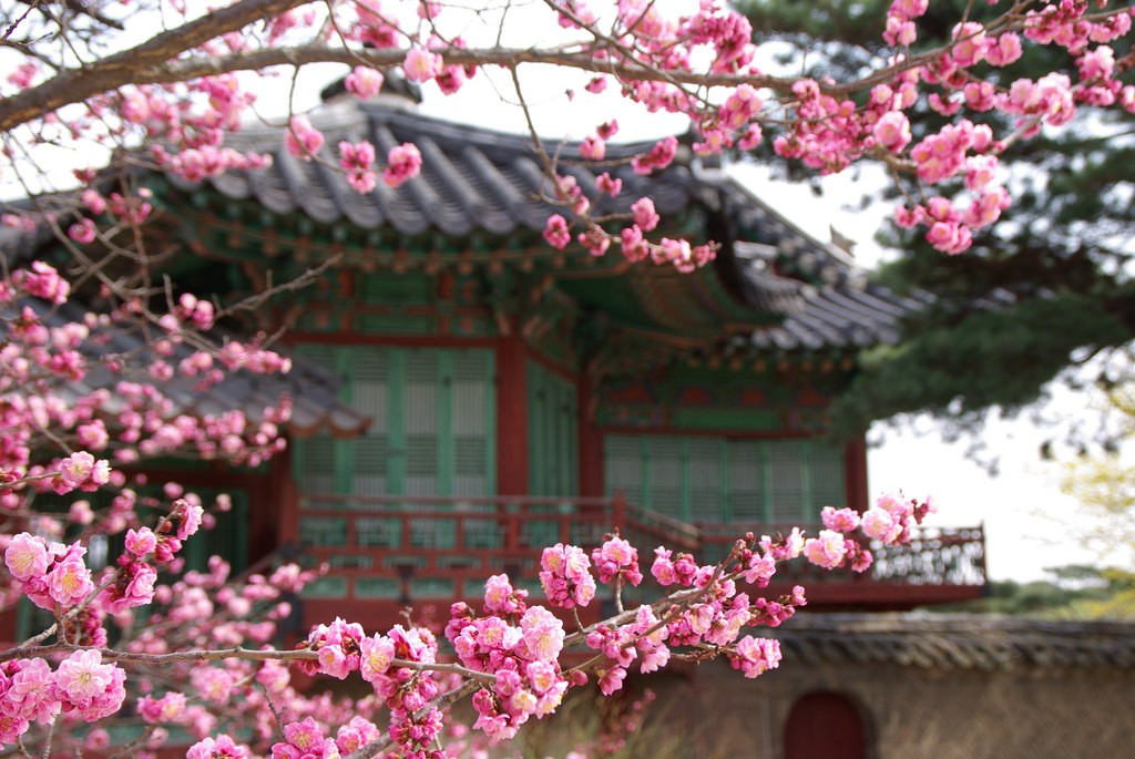 Changdeokgung Secret Garden © mill56 / Flickr
